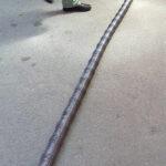 Изготовление длинных пружин в Санкт-Петербурге